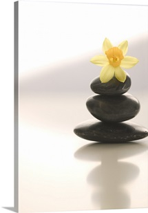 Flower Balancing On Rocks