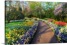 Pathway In Kuekenhof Gardens With Hyacinths, Daffodils, Tulips, Holland