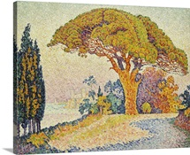 Pine Trees At Bertaud, Saint- Tropez (Provence) By Paul Signac