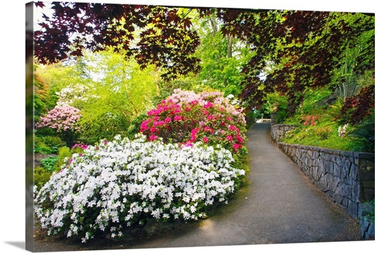 Spring flowers in crystal springs rhododendron garden portland oregon wall art canvas prints for Crystal springs rhododendron garden