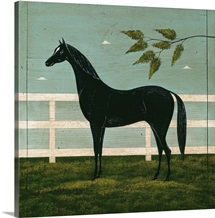 Black Horse Fenced