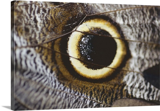 A close, magnified view of an eye-looking marking on an insect