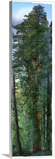 Prairie Creek Redwoods State Park, California