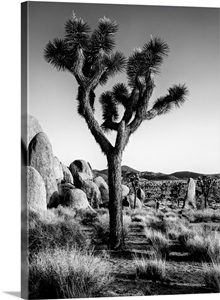 joshua tree divorced singles dating site Joshua tree, 40 last  looking to see who's out there  a completely free no-nonsense dating site.