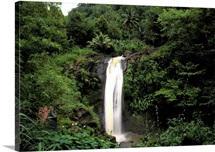 Caribbean, Grenada. Concord Falls in tropical rainforest