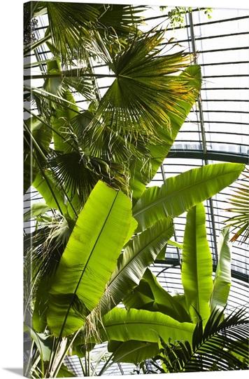 germany hessen frankfurt am main palmengarten indoor tropical trees photo canvas print. Black Bedroom Furniture Sets. Home Design Ideas