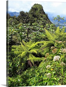 Puerto Rico, Luquillo, El Yunque National Forest, Tropical Rainforest