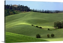 Rolling fields and row of cypress trees, Tuscany, Italy