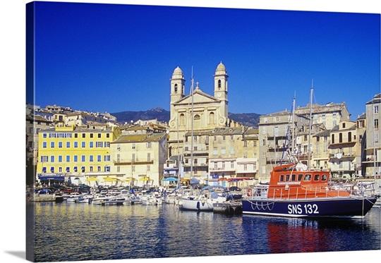 chat de france Bastia