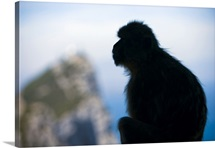 Gibraltar, Mediterranean area, The Rock, Pillar of Hercules or Calpe, Barbary Macaque
