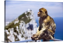 Gibraltar, Mediterranean sea, The Rock, Pillar of Hercules or Calpe, Barbary Macaques