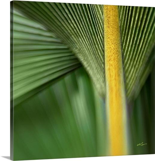 Chinese Palm