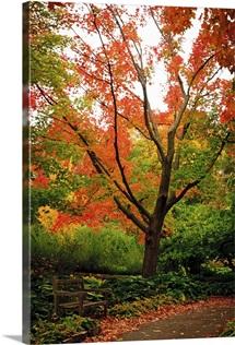 Autumn Pathway I