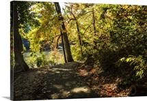 Autumn Pathway II