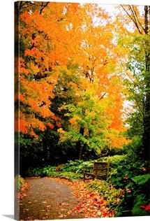 Autumn Pathway III
