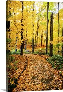 Autumn Pathway IV