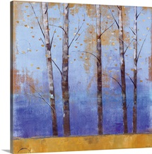 Birch Trees I