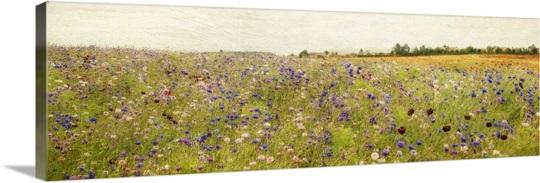 Field I mini