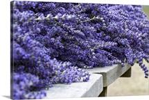 Lavender Harvest I