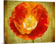 Sun Poppy I