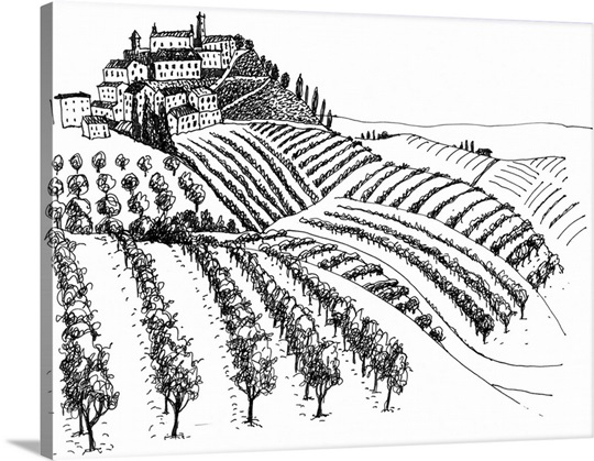 A black and white ink drawing of a vineyard