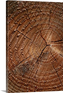 A close up of tree rings