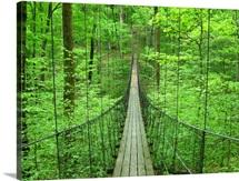 A cool suspension bridge in Hidden Falls Salvation Army Camp.