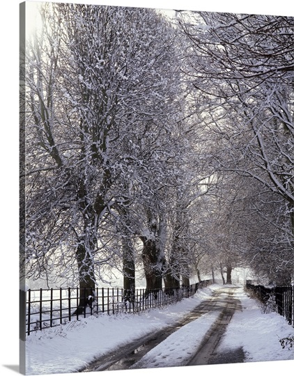 A tree-lined avenue at wintertime in Winchelsea, Winchelsea, East Sussex, England.