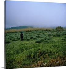 A woman with an umbrella in a field, Italy.