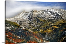 Beautiful red oak and golden aspens dot landscape below granite peaks, Lehi, Utah.