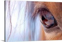 Brown horse eye with long lashes.