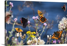 Butterflies sitting on flowers