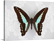 Butterfly on wallpaper background
