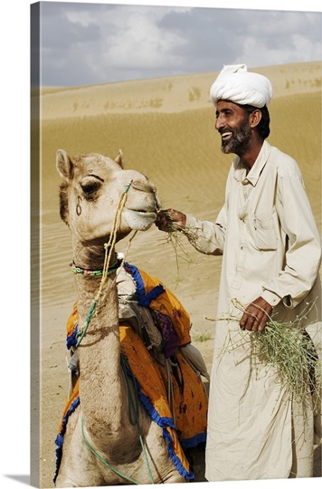 Camel being fed by his owner. Great Thar desert, Rajasthan, India.