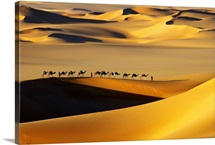 Camels in the Desert, Arakou, Niger