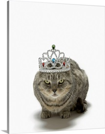 Cat wearing a tiara