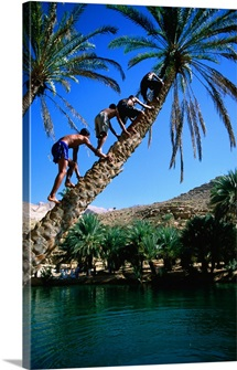 Children climbing palm tree, Oman, Ash Sharqiyah, Moqal
