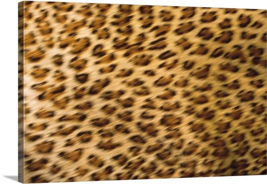 Cheetah Fur Close Up Close-up of che...
