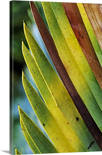 Close-up of Cycad leaves.