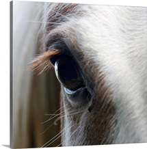 Close up of White horse eye
