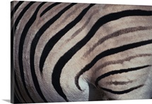 Close up of Zebra hide
