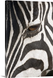 Close-up of Zebra's eye, Africa, Tanzania, Ngorongoro Conservation Area