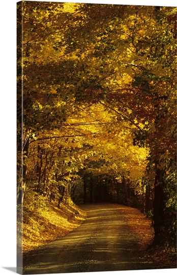 Country lane in the fall, New England, USA