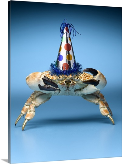 Crab Wearing Birthday Party Hat Photo Canvas Print Great