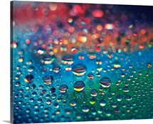 Dew on the Rainbow Color, Close Up, Differential Focus, In Focus, Out Focus