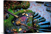Fallen autumn leaves on the wet basin