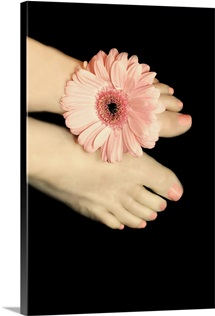 Female feet with pink gerbera daisy between her toes.
