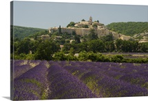 Field of Purple Lavender (Lavandula) Below Banon Town, Provence, France