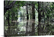 Flooded Amazon rainforest during rainy season.