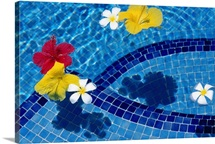 Flowers in a pool, St. James, Barbados, Caribbean